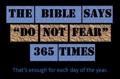 fear not 365