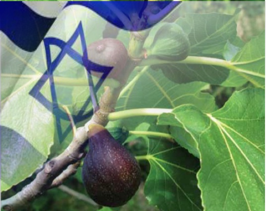 fig-tree-and-israel